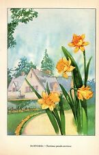 "1926 Vintage GARDEN FLOWER ""DAFFODIL"" GORGEOUS COLOR Art Print Lithograph"