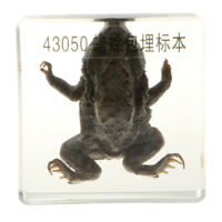 Real Toad Taxidermy Collectible In Clear Lucite Block Embedding Specimen
