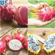 USA SELLER Dragon Fruit Mix (Red,purple, Yellow,White) 20 seeds HEIRLOOM