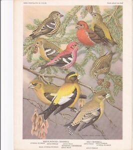 Set 30 Bird Portraits In Color Univ. Minnesota 1960 Reprint of 1934 General Mill