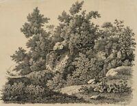 J.SCHÜTZ(18.Jh), Überwucherter Felsen mit Botanikstudien, Radierung