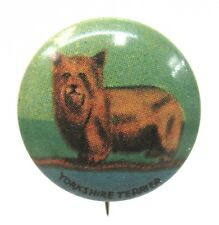 1930's YORKSHIRE TERRIER Dog tin litho pinback button