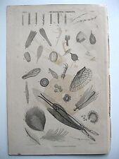 stampa antica old print OGGETTI PARTICELLE AL MICROSCOPIO  Londra 1862
