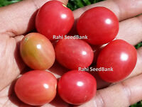 Rosalita Tomato - Pink Grape Shaped Tomatoes Grows in Long Clusters! - 10 Seeds