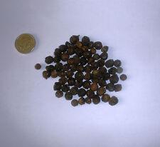 Árbol de alcanfor árbol, Cinnamomum Camphora 25 semillas.