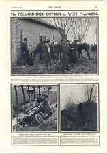 1914 Pollard Tree District West Flanders Tending Officers Horses