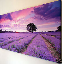 SUNSET  LAVENDER  CANVAS PRINT WALL ART PICTURE  18 X 32 INCH