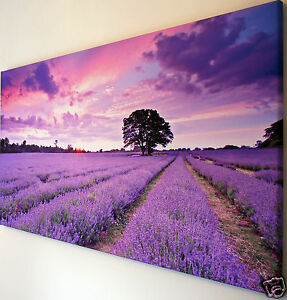 SUNSET  LAVENDER  CANVAS  PICTURE  18 X 32 INCH