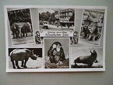 Ansichtskarte Zoologischer Garten Frankfurt 1956 Zoo (II)