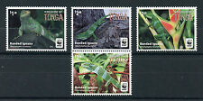 Tonga 2016 MNH Banded Iguana WWF 4v Set Reptiles Lizards Stamps