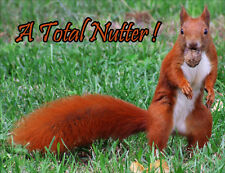 Red Squirrel - A Total Nutter! Fridge Magnet - Wildlife