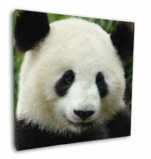 "Face of a Giant Panda Bear 12""x12"" Wall Art Canvas Decor, Picture Pri, ABP-3-C12"