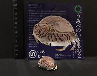 Kitan Club Kaiyodo Nature Techni Colour Red-streaked Box Crab SP Figure