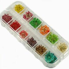 Fa- Au_ 1 Box 60 Real Dry Dried Flower Nail Art Tips Decoration Diy Nail Sticker