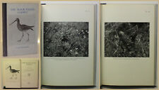 Haverschmidt The Black-Tailed Godwit 1963 Ornithologie Vogelkunde Zoologie xy