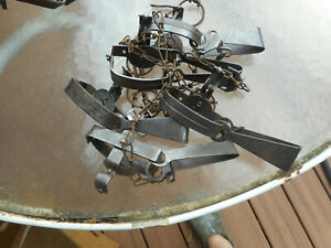 LOT OF 5 VICTOR #1 LONG SPRING TRAPS