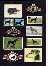 DOBERMAN PINSCHER MOUNTED SET VINTAGE DOG COLLECTABLE CARDS STAMPS AND BANDS