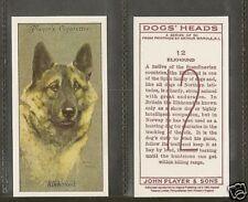 1940 Reissue Arthur Wardle Dog Art Head Player Cigarette Card Norwegian Elkhound