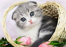 3D Lenticular Picture Scottish Fold Kitten Cat In Basket Size 39x29cm apx New