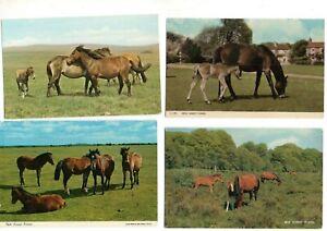 30 postcards:  NEW FOREST PONIES HORSES vintage & modern