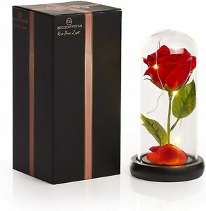 DECO EXPRESS Rose Dome Lights,Beauty and The Beast Rose in a Glass With LED