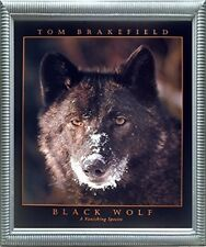 Black Wolf (A Vanishing Species) Silver Framed Picture Art Print (20x24)