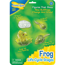 Lebenszyklus Frosch