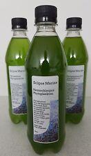 500ml Premium Nannochlorpus marine Phytoplankton