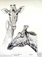 "1973 Reticulated Giraffe B/W Framable Art Print by Ray Harm 11""x15"" L@K"