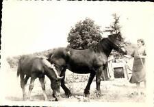 snapshot cheval jument poulain et femme avec baton pré horse vers 1940 ferme