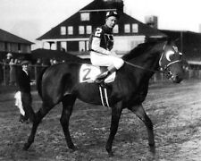 Champion Racehorse SEABISCUIT Glossy 8x10 Photo Thoroughbred Horse Print Vintage
