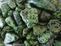Twelve Green Dalmatian Jasper Tumbled Stones 15mm Healing Crystals Black Magic
