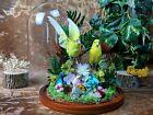BD05 Taxidermy 2  Parakeet Bird Specimen Dome oddities curiosities home decor