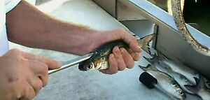 "Fishing backbone Fish Deboner - Stainless - Rapid  removal 1/2""x 14"" Quick Easy"