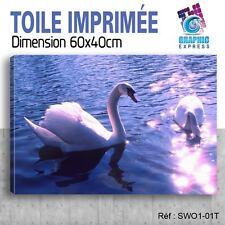 60x40cm - TOILE IMPRIMÉE TABLEAU  POSTER DECO - SWAN - SIGNE - OISEAUX - SW1-01T