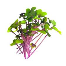Vegetable - Red Cabbage - 2000 Seeds - First Class