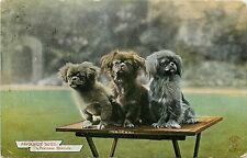 c1910 Dog Postcard; Knight Favorite Dogs Series 1709, Pekinese Spaniels, Posted