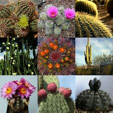 100 mixed Cactus seeds mix succulent seeds mix very diverse variety of species
