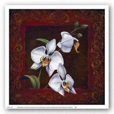 Orchid Study I Thomas Wood Art Print 12x12