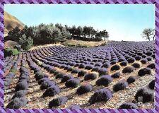 postkarte Landschaft provence, ein champ Lavendel-