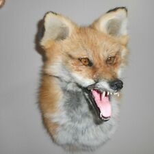 Red Fox Wall Mount Taxidermy Actual Jaws And Teeth Gift