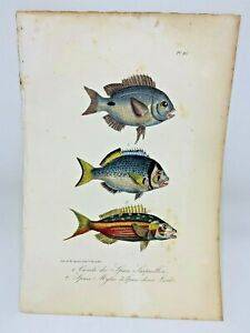 Fish Plate 86 Lacepede 1832 Hand Colored Natural History
