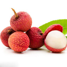 10pcs Lychee Litchi Fruit Seeds Delicious Sweet Seasonal Perennials Plant S086
