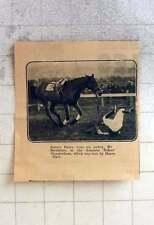 1925 Square Dance Loses Jockey Mr Bernheim Amateur Rider Steeplechase