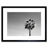 Black And White Palm Tree Art Print Framed Poster Wall Decor