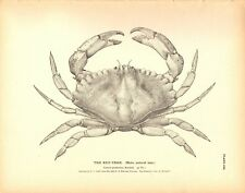 Rare 1884 Antique Fish Print ~ Crab ~ You choose one