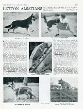 GERMAN SHEPHERD OUR DOG 1951 DOG BREED KENNEL ADVERT PRINT PAGE LETTON KENNEL