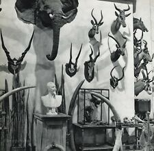 1955 Vintage BIG GAME HUNTING Trophy Taxidermy Ivory Tusk ROBERT DOISNEAU 11x14