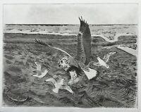 Aquatinta Radierung Sturmmöwen attackieren Greifvogel Winter Samsø Dänemark