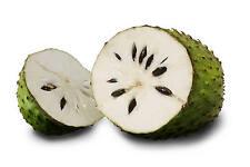 GUANABANA  annona muricata ENORME  FRUTA  7 semillas seeds
